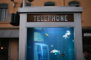 Ikan pun bisa telepon